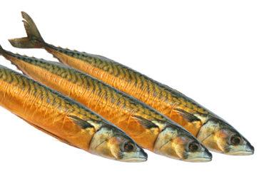 Omega-3-Fettsäuren - Fischöl besser als Pflanzenöl?