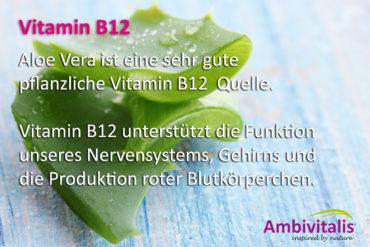 Vitamin B12 ist in Aloe Vera enthalten