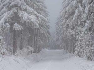 Winterblues: Tipps, wie Sie dem Wintertief entkommen!